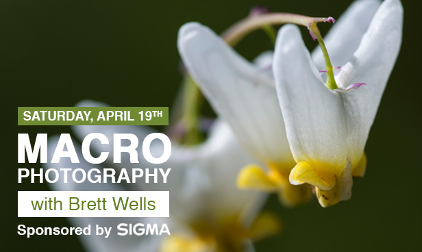 Macro Photography with Brett Wells